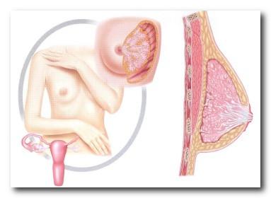 Повышенный пролактин: симптомы у женщин