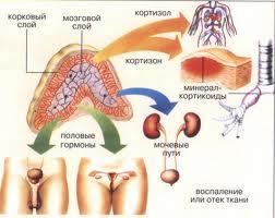 Заболевания надпочечников