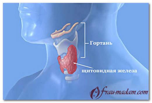 Что регулируют гормоны щитовидной железы?