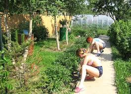 похудение и огород