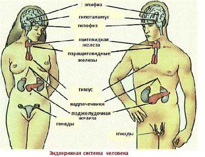 Что лечит эндокринолог?