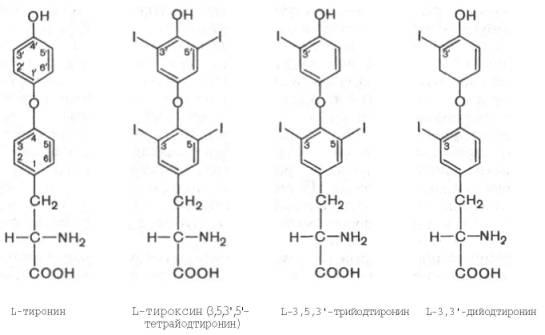 И вот такая огромная молекула